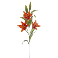 Tiger Lily Stem Orange