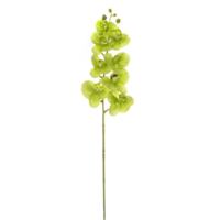 Phalaenopis Orchid Real Touch 8 Flowers Green