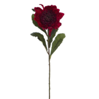 Australian Native Waratah Red