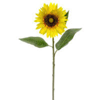 Sunflower Stem Yellow