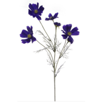 Cosmos Spray Cobalt Blue