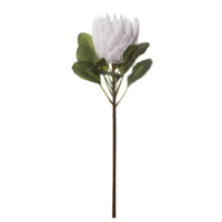 Australian Native King Protea White