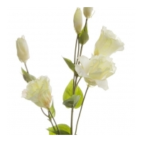 Lisianthus Spray Cream