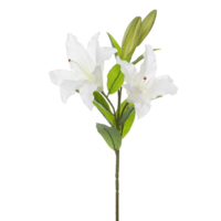 Casablanca Lily Real Touch White