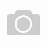 Nikki Bear with Scarf (White)